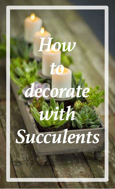how-to-succulents